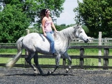 Equine and Animal Reiki Healing Courses - Lincolnshire