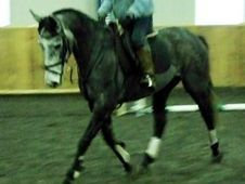 Quality 15. 2hh Grey Irish Mare Rising 5yrs