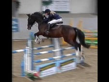 Proven Showjumping mare