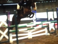 Super fun mare re-advertised due to time wasters