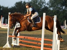 15. 1 Liver Chestnut Mare with Great Potential
