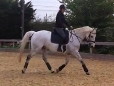 All Rounder horse - 12 yrs 16.1 hh Dapple Grey - Oxfordshire