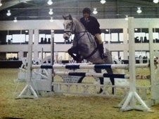 Pony Club Ponies horse - 6 yrs 14.2 hh Dapple Grey - Northamptons...