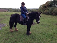 Lovely Family Cob *price Reduced*