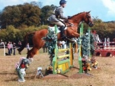 All Rounder horse - 6 yrs 16.2 hh Chestnut - Staffordshire