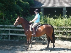 Young Stock  horse - 4 yrs 15.3 hh Bright Bay - Devon
