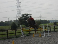 Family horse - 16 yrs 14.2 hh Chestnut - North Yorkshire