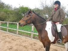 All Rounder horse - 9 yrs 15.0 hh Tri-Coloured - Humberside