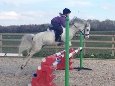 All Rounder horse - 5 yrs 1 mth 12.0 hh Grey - Roxburghshire