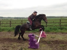 All Rounder horse - 10 yrs 14.2 hh Bay - Lincolnshire