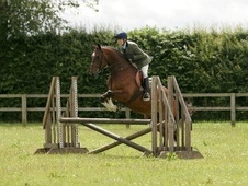 All Rounder horse - 7 yrs 11 mths 16.2 hh Bay - County Durham