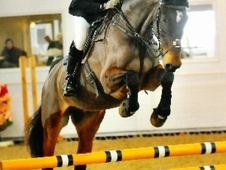 Eventers horse - 11 yrs 17.0 hh Bay - County Durham