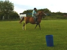 Other horse - 20 yrs 14.1 hh Chestnut - West Yorkshire