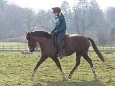 13. 2hh 6 year old mare