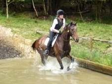 All Rounder horse - 10 yrs 15.1 hh Bay - East Sussex