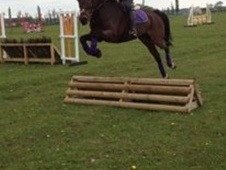All Rounder horse - 7 yrs 15.2 hh Bay - Essex