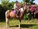 All Rounder horse - 6 yrs 16.1 hh Skewbald - Kent