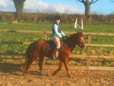 Pony Club Ponies horse - 9 yrs 13.2 hh Chestnut - Oxfordshire