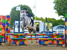 Talented 13. 1hh 7 Year Old Gelding