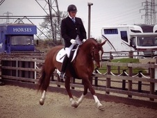 Botters Sports Horses - Leicestershire