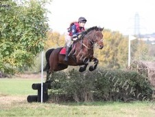 15hh Fun All Rounder