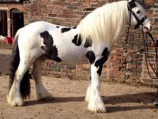 HOYS Potential Traditional For Sale