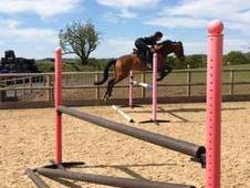 REDUCED - Stunning KWPN Dutch warmblood Mare for sale