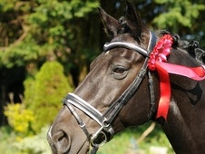 Design a bridle - Mid Glamorgan