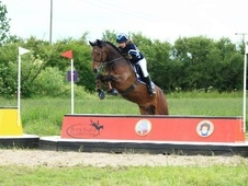 All Rounder horse - 10 yrs 14.2 hh Bay Roan - Hertfordshire