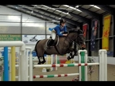 Warmblood superstar for sale