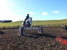 Super ISH 16. 1 Grey Mare