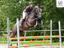Uncomplicated, Athletic, Stunning Sport Horse!!