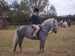 All Rounder horse - 7 yrs 12.3 hh Steel Grey - Staffordshire