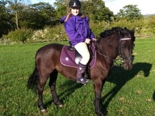 All Rounder horse - 11 yrs 13.1 hh Black - Cleveland