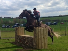 16. 2hh Full Registered Draught Mare