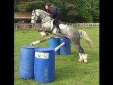 All Rounder horse - 6 yrs 15.1 hh  - Hampshire