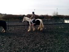 14hh Coloured Cob Mare For Sale