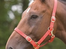 Shires Nylon Adjustable Headcollar (Extra Full Size) - Leicesters...