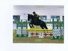 Eventers horse - 8 yrs 2 mths 16.0 hh Black - North Yorkshire