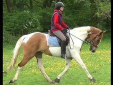 All Rounder horse -  0.0 hh Skewbald - Hampshire