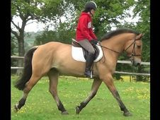 All Rounder horse - 4 yrs 0.0 hh  - Hampshire