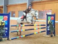 15hh Irish Sports 7 Yr Old Mare