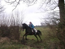 All Rounder horse - 12 yrs 4 mths 15.1 hh Dark Bay - Kent