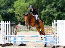 Danny 5 Year Old 16. 3hh By Vdl Hold Up Premier