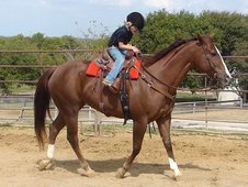 Beautiful registered paint Mare