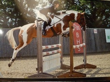 All Rounder horse - 9 yrs 16.1 hh Skewbald - Kent