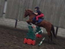 14. 0HH PC PONY FOR SALE