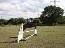 All Rounder horse - 15 yrs 9 mths 14.3 hh Chestnut - South Yorkshire