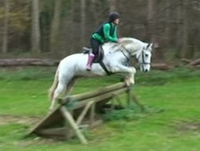 All Rounder horse - 15 yrs 14.2 hh Fleabitten Grey - Cambridgeshire