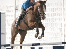 All Rounder horse - 4 yrs 3 mths 16.0 hh Chestnut - Norfolk